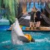 Дельфинарии, океанариумы в Мокроусово